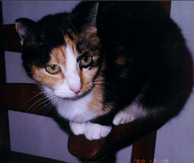 Moxie Rat 12-19-99